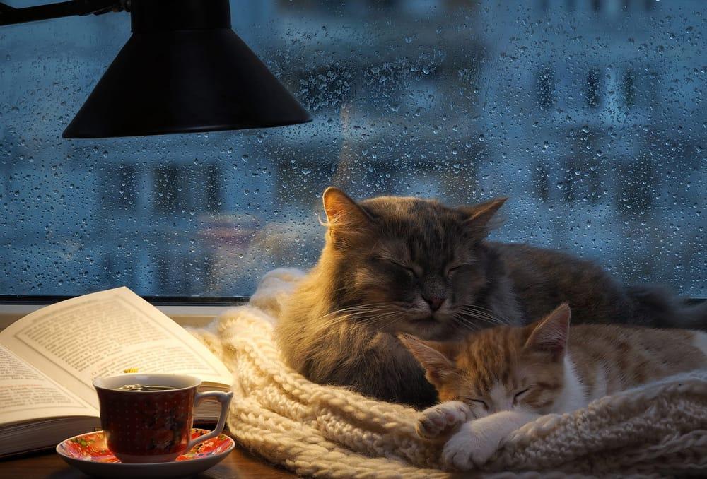 Image result for сон дождь за окном
