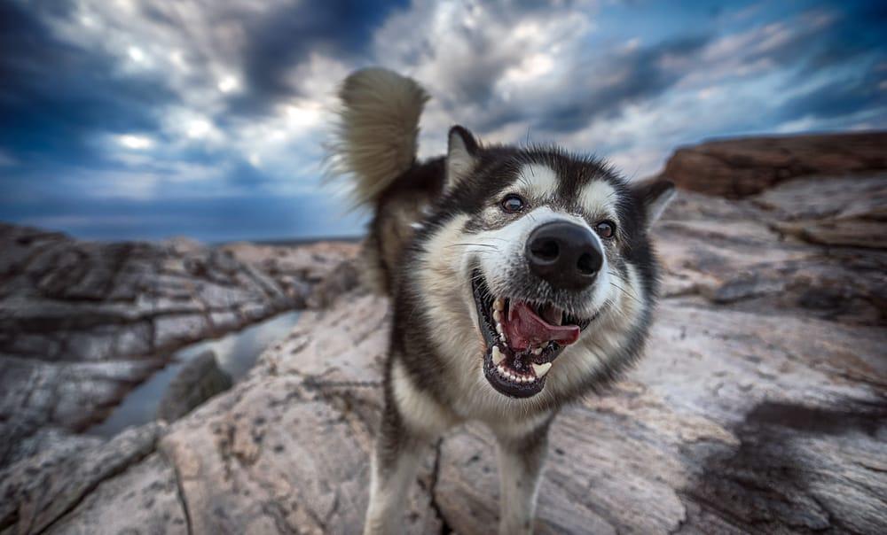 Картинка для рабочего стола: собака, природа