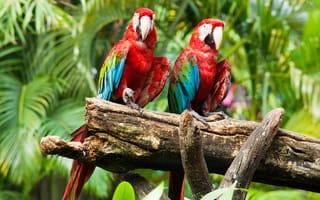 Pticy Oboi Na Rabochij Stol I Kartinki