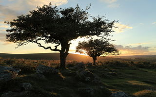 Картинка landscape, dartmoor, trees, nature, sunset