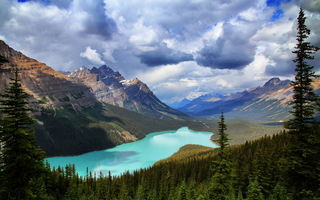 Обои Banff National Park, Peyto Lake, горы, озеро, Canada, природа, лес