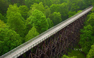 Обои Virginia Creeper Trail, лес, мост, Virginia, США, деревья