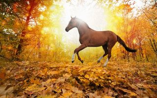 Картинка horses in fall leaves, yellows, forest