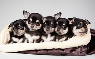 Картинка national puppy day, 2015, celebrity pet and home life style
