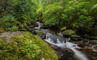Обои природа, owengarriff river, камнидеревья, ireland, лес, река, killarney national park