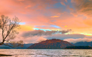 Обои Lake Wanaka, South Island, Wanaka Tree