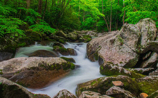 Обои North Carolina, деревья, река, лес, Great Smoky Mountains National Park, камни, пейзаж, природа, водопад