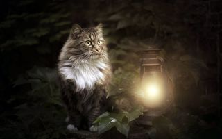 Обои cat, animals, lantern