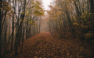 Картинка fall, chasingfog, fog, forest