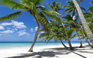 Обои пальмы, tropical, песок, beach, тропики, paradise, vacation, берег, море, sea, sunshine, ocean, summer, пляж, palms