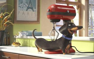 Обои collar, Paris, wheat, mixer, The Secret Life of Pets, olive oil, apple, comedy, Dachshund, fruit, animal, cinema, massage, movie, dog, countertop, cup, kitchen, window, 2016, cartoon, pyrex, frame, curtain, graphic animation, film, Official, book, oil