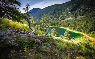 Картинка forest, mountain, dry grass, turquoise lake, trees