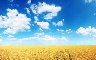 Картинка пшеница, ясно, колосья, равнина, солнечно, нива, синева, облака, горизонт, лето, поле