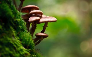 Картинка macro, photography, nature, Mushrooms, moss