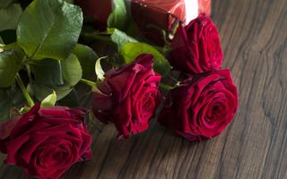 Обои red, красные розы, valentine`s day, love, gift, romantic, roses