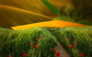 Картинка field, landscape, nature, трава, view, маки, природа, grass, colors, scenery, цветы, поле, вид, trees, path, путь, деревья, пейзаж, poppies, нива, flowers