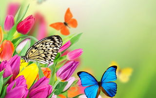 Обои flowers, цветы, spring, tulips, butterflies, fresh, бабочки, colorful, тюльпаны, весна, beautiful, purple, yellow