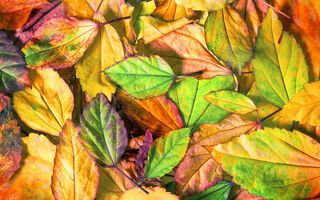 Обои осень, leaves, autumn, листья, осенние, texture, colorful