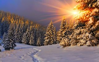 Обои природа, небо, sunset, nice, path, snow, white, nature, снег, зима, sky, пейзаж, road, forest, beautiful, winter, cool