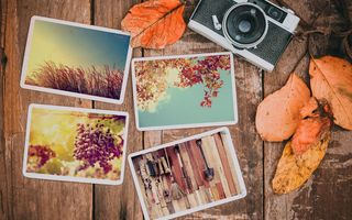 Обои осень, осенние, colorful, листья, autumn, wood, камера, leaves, happy