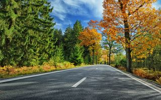 Картинка дорога, листья, autumn, парк, colorful, road, осень, forest, лес, landscape, деревья, country, tree, park, leaves, fall