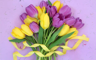 Обои tulips, цветы, тюльпаны, fresh, букет, flowers, yellow, purple, лента