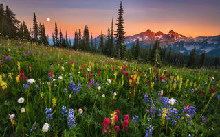 Картинка moonrise, flowers, field, mountain
