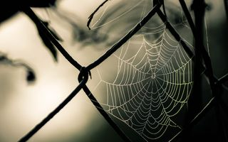 Картинка photography, Spider web, macro, fence, nature