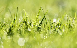 Обои grass, природа, растения, трава, plants, nature, свет, green, light, зеленый