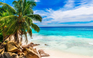 Обои summer, shore, tropical, paradise, palms, пляж, sea, песок, beach, пальмы, море, sand, берег