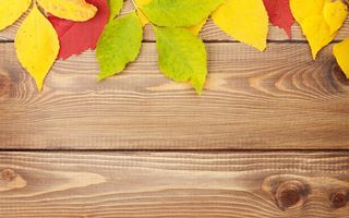 Обои autumn, осенние листья, texture, дерево, wood, colorful, leaves