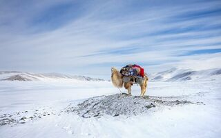 Картинка Winter, Camel, Migration, Mongolia