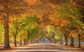 Картинка город, Autumn colour, australia, Tunnel To Paradise, улица, Victoria