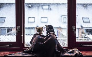Картинка cat, snow, winter, window, blanket