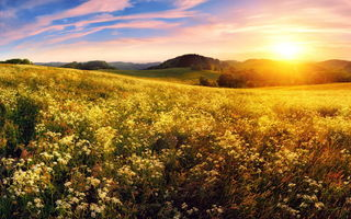 Картинка закат, meadow, field, sunset, луг, цветы, flowers, поле