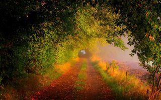 Обои forest, trees, autumn, leaves, path, road, walk, nature, colors, fall, field, colorful