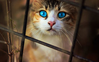 Обои Cat, Eyes, Blue
