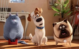 Картинка view, chloe, the secret life of pets, room, mel, cat, dog, cartoon, max, animals