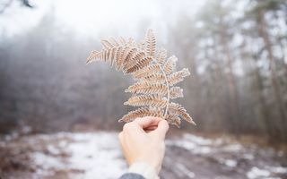 Картинка snow, winter, covered, fern