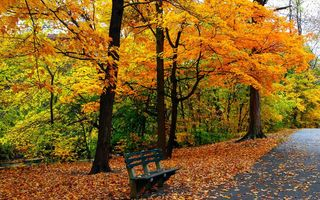 Картинка leaves, bench, trees, Road, colors, park, grass, autumn, walk