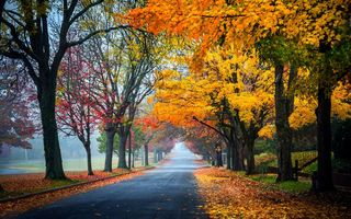 Картинка trees, path, walk, autumn, park, leaves, colors, Road, fall, colorful, forest