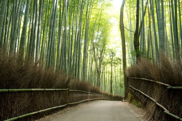 Обои light, effects, road, bamboo, trees, nature