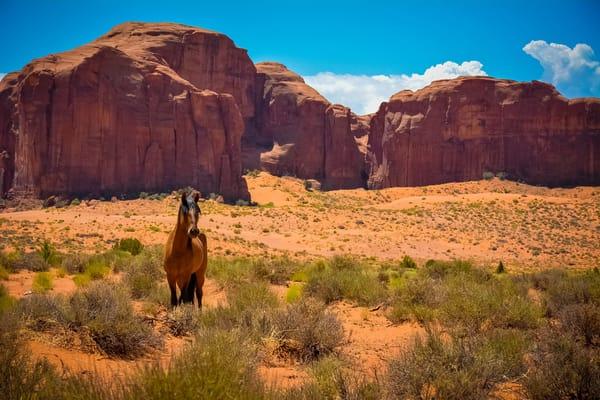 Лошади - Обои для рабочего стола, картинки, фоны, заставки | 400x600
