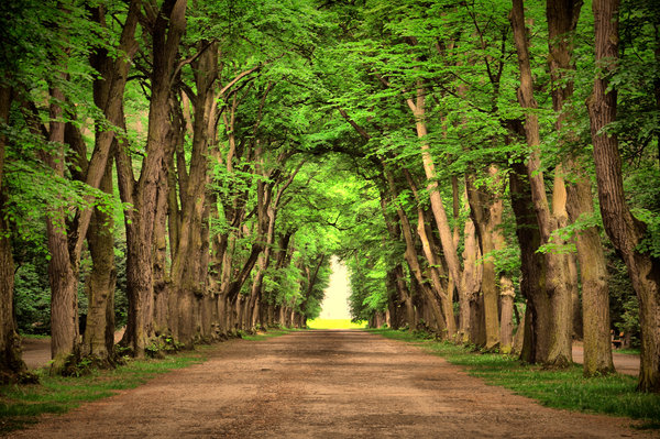 Обои nature, green, дороги, road, деревья, trees, landscape, beautiful, зеленый