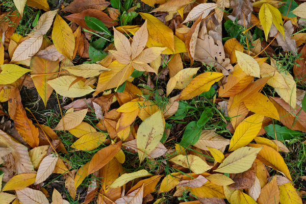 Обои leaf, autumn, green, yellow