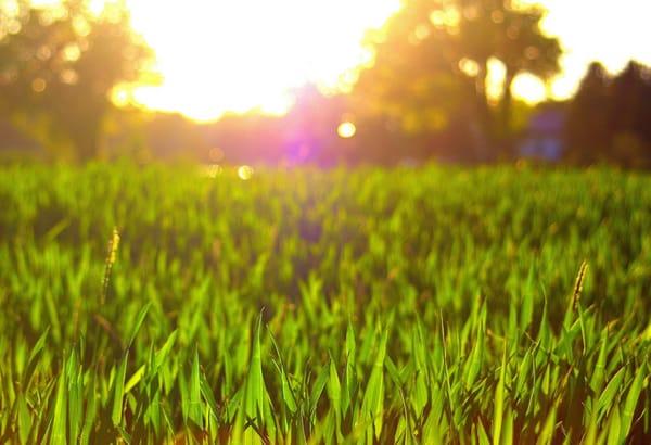 Небо поля травы луга березы Стоковое Изображение - изображение ... | 410x600