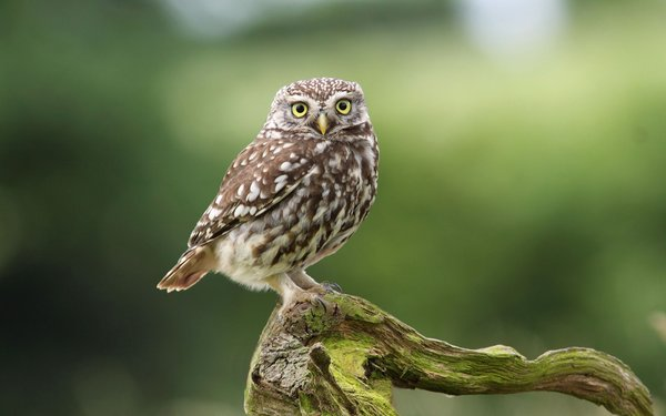 Обои branch, Owl, dry, cute