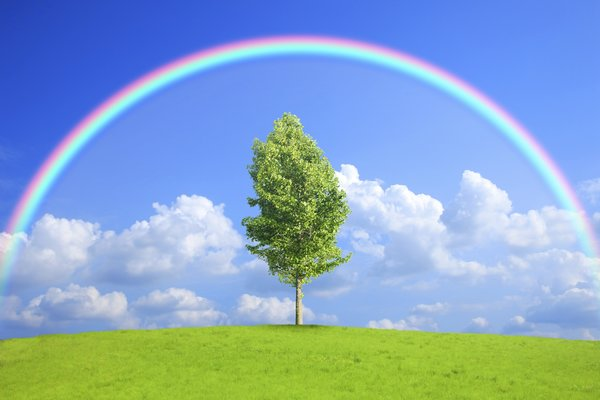 Обои field, tree, rainbow