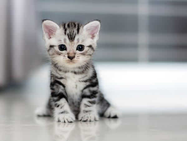 Обои для телефона: Маленький милый серый котенок